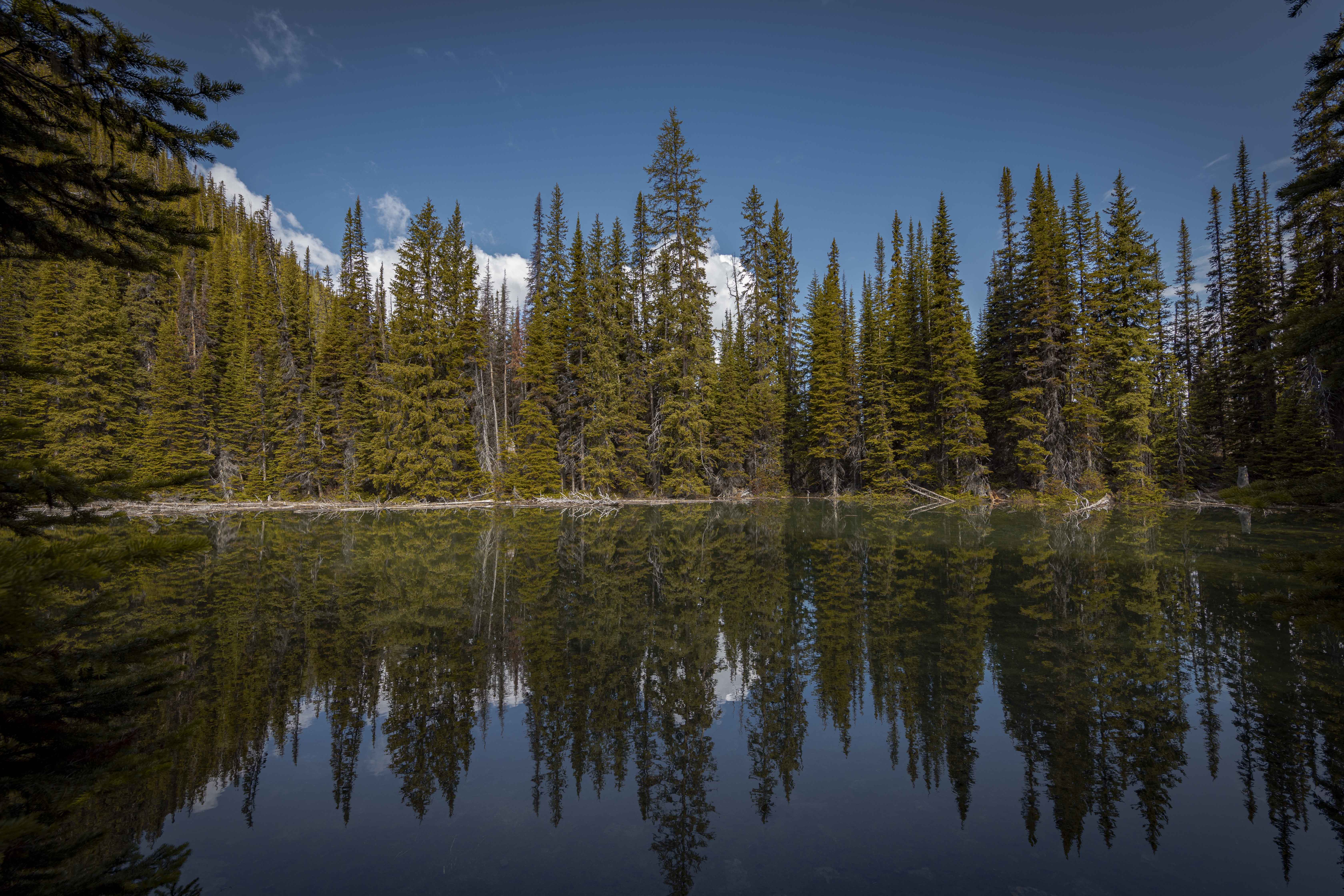 2020-06-19 Vista Lake & Arnica Lake Hike 6
